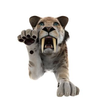 25863412 - saber-toothed tiger isolated on white