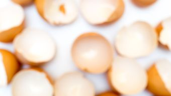 81759234 - blur egg shell on white background copy space